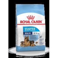 Royal Canin Maxi Starter Корм для щенков крупных пород в период отъема и до 2-месячного возраста, а также для беременных и кормящих сук
